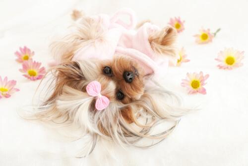 Flores y perros