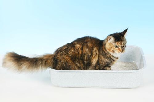 ¿Qué debes hacer si tu gato duerme en el arenero?