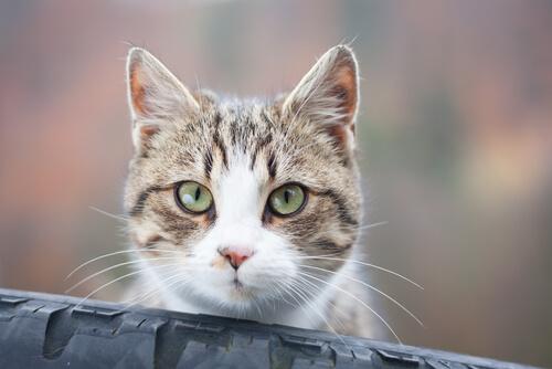 ¿Por qué tu gato te mira fijamente?