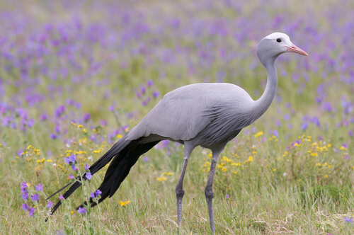 5 aves nacionales de África