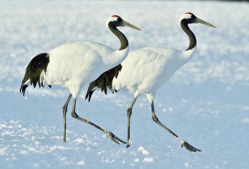 5 aves nacionales de Asia