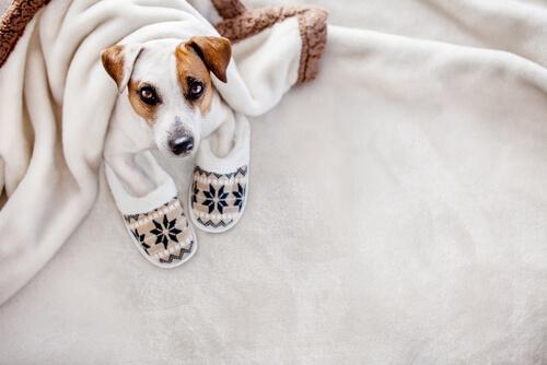 Hipotermia en perros: tratamiento