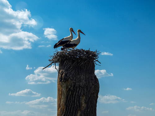 Klepetan y Malena, dos aves enamoradas