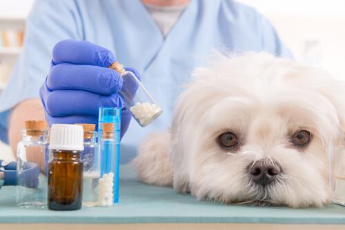 ¿Debo recurrir a la homeopatía veterinaria?