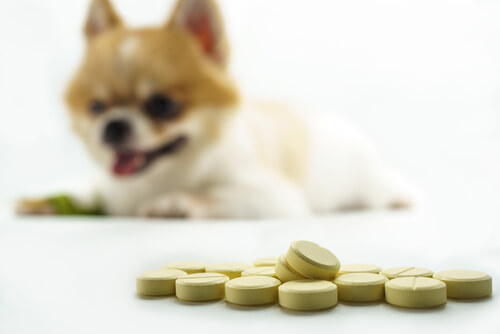 Homeopatía veterinaria en perros