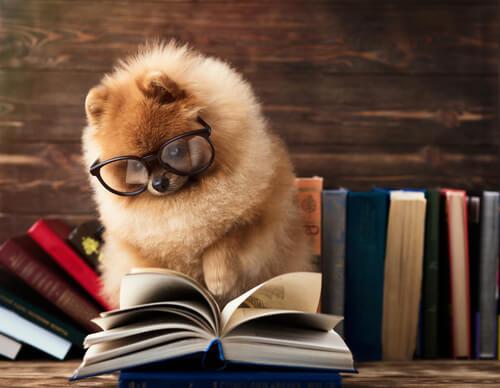 El experimento de inteligencia animal que los perros fallan