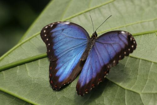 5 animales de color azul