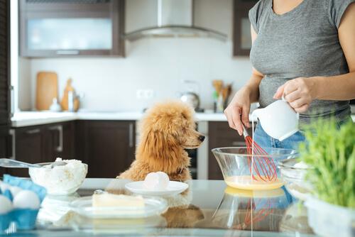 Mascotas en la cocina