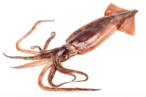 Mecanismo de defensa del calamar