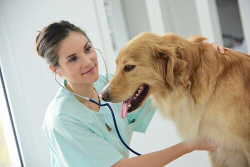 El megaesófago en perros: síntomas y tratamiento