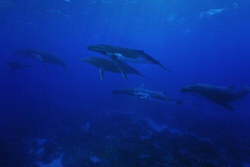 Muchas ballenas juntas