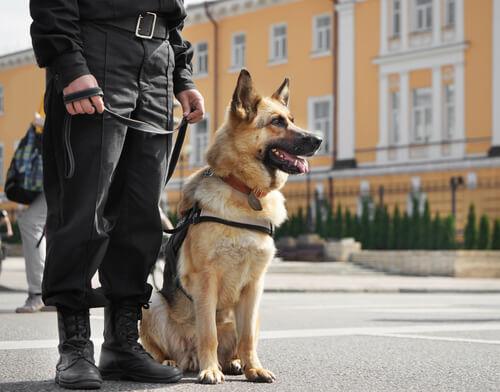 Nombres de perros policías hembras