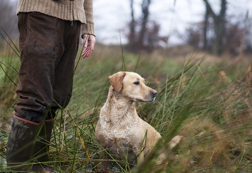 Cuestiones legales en los perros de caza