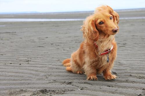 Nombres para perros peludos machos