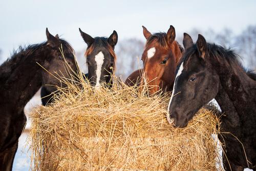 Nutrientes que necesita tu caballo