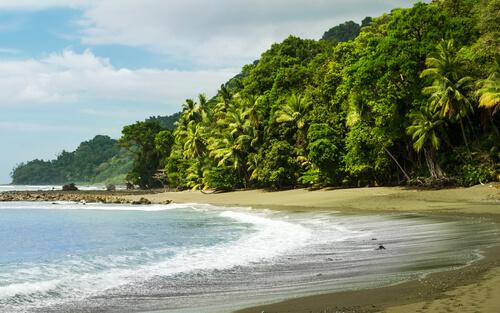 Conoce la fauna del Parque Nacional Corcovado (Costa Rica)