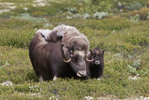 Parque Nacional de Groenlandia: el más grande del mundo
