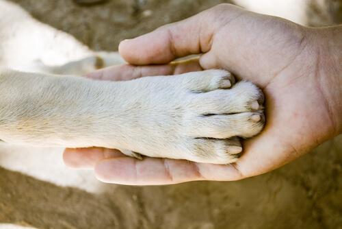 ¿Cuál es el perro con las patas más fuertes?
