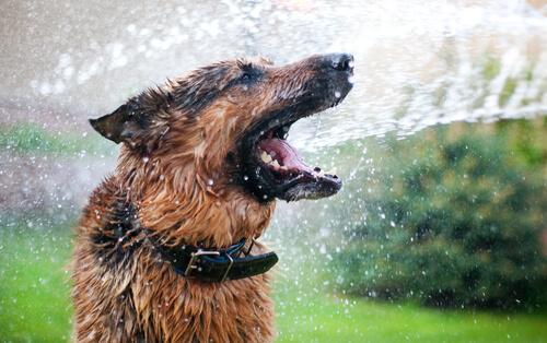 Perro, manguera y agua