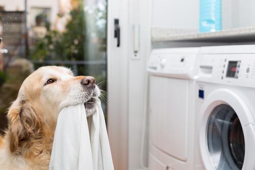 Perro que pone la lavadora