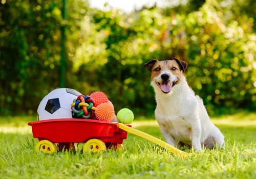Perro recoge sus juguetes