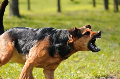 Agresividad canina y hormonas