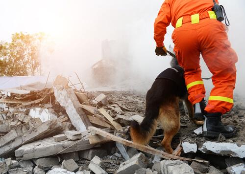 Perros para rescate de personas