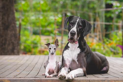 ¿Por qué los perros pequeños tienen más carácter que los grandes?