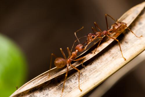 Plagas de insectos agrícolas