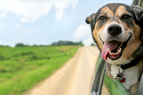 Tips para ir de viaje con el perro