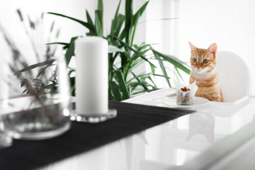 Postres para gatos