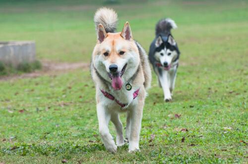 Problemas de apareamiento en perros