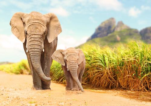 Detectar terremotos para proteger a los elefantes