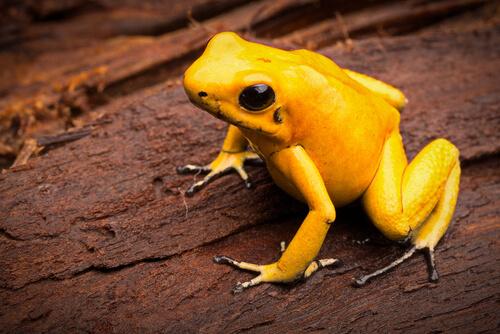 5 especies más venenosas del mundo