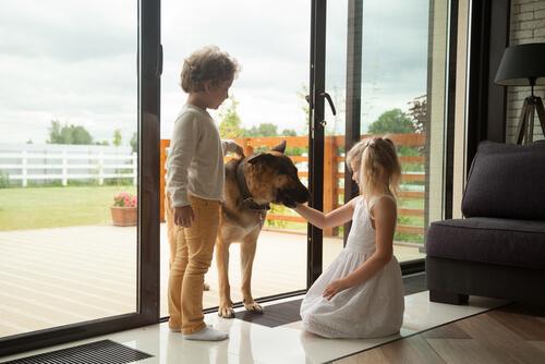Relación entre niños y perros
