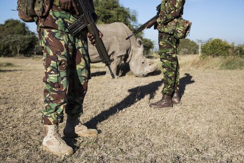 Rinocerontes en la guerra