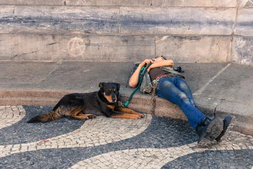 5 preciosas rutas para recorrer Europa con tu perro