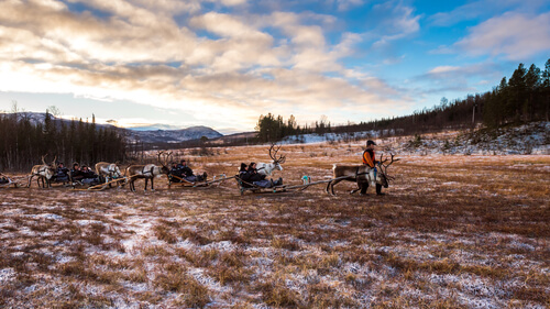 Los sami y los renos