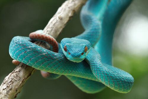 Los sentidos de las serpientes