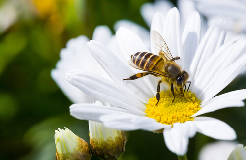 Sin abejas