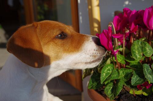 Terapia floral para perros
