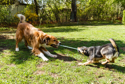 Test de inteligencia para perros