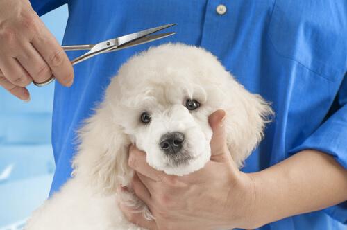Tipos de pelo de perro