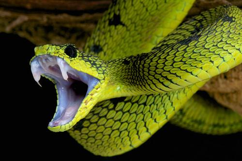 Tipos de serpientes en el mundo