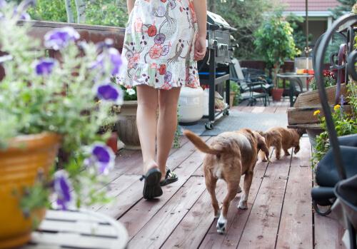 Tratamiento floral para perros.