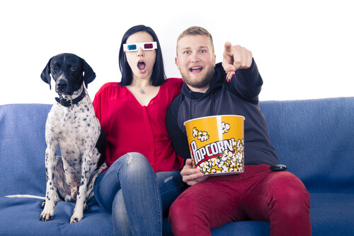 Ver películas con perros