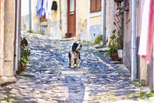 Viajar a Lisboa con perro