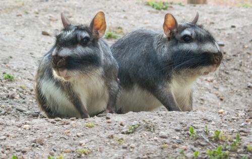 5 Animales Que Viven En Pastizales Mis Animales