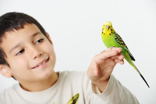 Ácaros en aves domésticas