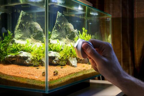 Accesorios para tu acuario